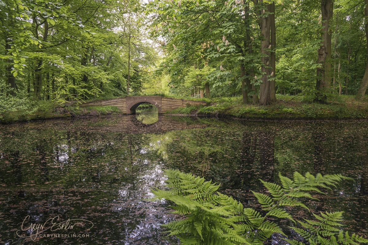 DSC03955-Bergen-Forest-PathBridge copy